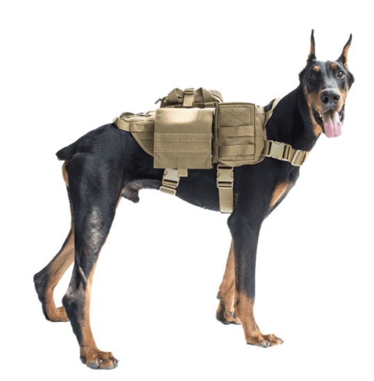 Military Dogs In Active Service